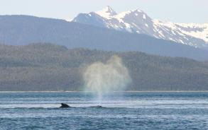 humpback whale blowhole