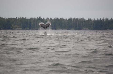 sitka whale boat tour