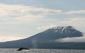 whale tale with Mt. Edgecumbe